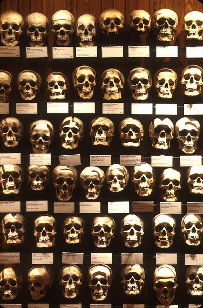 Музей медицинской истории Мюттера в Филадельфии