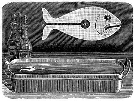 Плавающая бумажная рыбка
